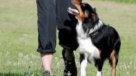 Harholdt hundekurs i mange år og har jobbet hos www.hundisentrum.no/ i Oslo. Har selv5 hunder, vært innom mange grener som utstilling, lydighet, agility, bruks-/rednings-hund, gjeting med mer. Konkurrerer aktivt med […]